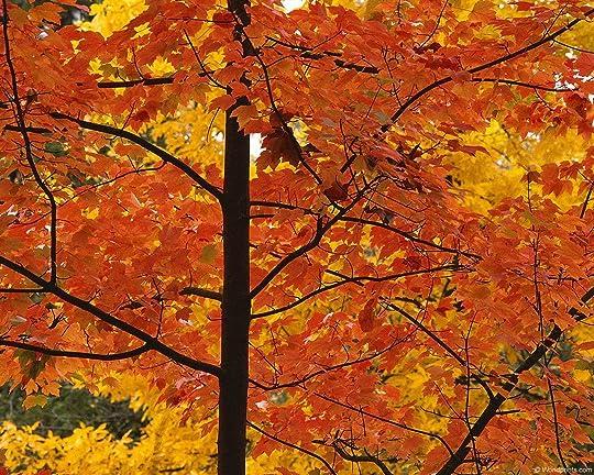 fall leaves 003