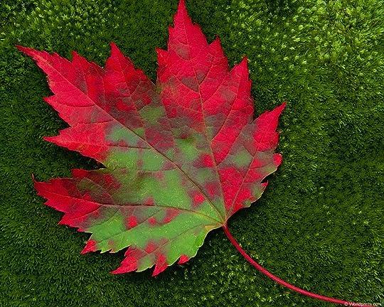 leaf onmoss