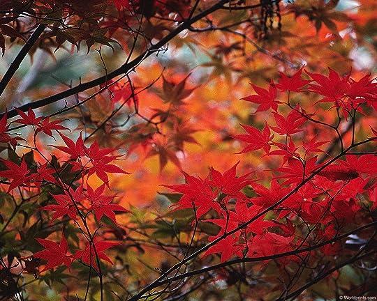 leaves014