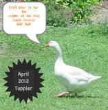 Apr Toppler Wild Goose