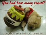 BEST-Halloween-Pet-Costumes-Funny-Animal-Costume-Ideas-for-Dogs-and-Cats-unique-holloween-top-ever-pets-29