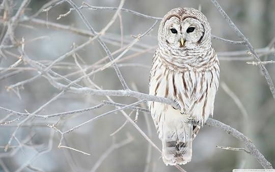 owl photo: White Owl winterwhiteowl_zps98d5f42a.jpg