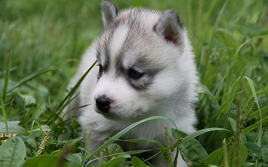 photo wolf-cub-_zpsa10414b9.jpg