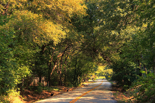Jellicoe Road 1