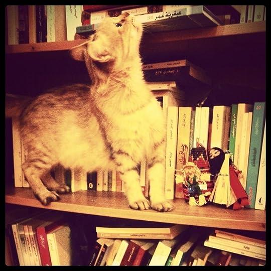 موغانا تتجول في مكتبتي