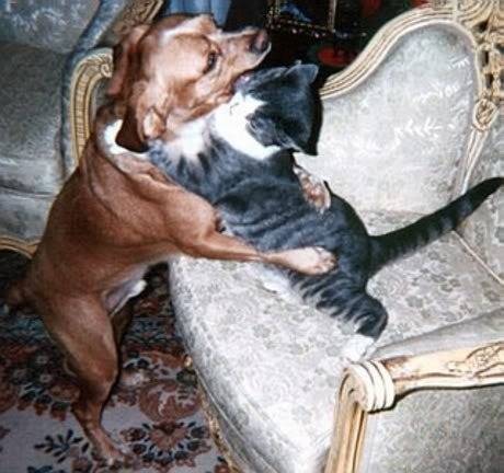 image of cat and dog hugging