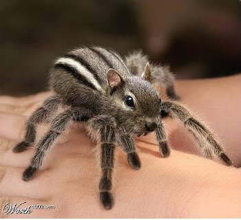 squirrel-spider