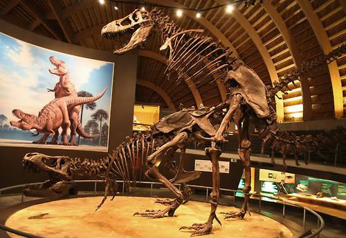 dinosaur bones boning