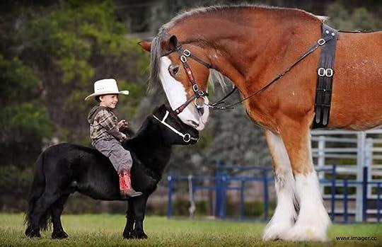 Img: Runt Horse