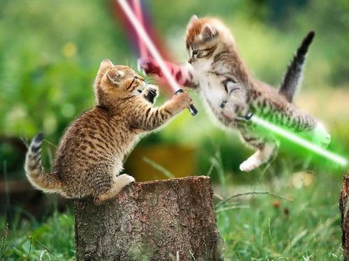 Jedi-kitten battle