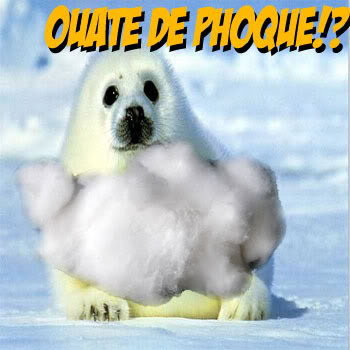 Ouate De Phoque!?