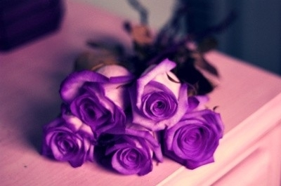 photo Crossingtheline-roses_zpsead17cc5.jpg