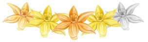 vanilla-rating-4-stars