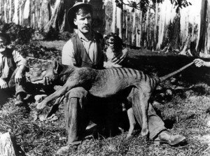 thylacine-tasmanian-tiger-1