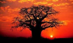 photo baobabsunset_zps4b63b20e.jpg