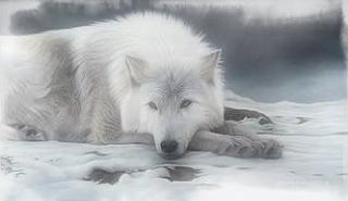 photo Wolf-White_zps2429dbf3.jpg