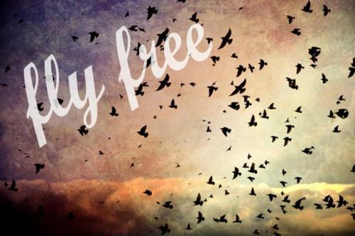 photo flyfree.jpg