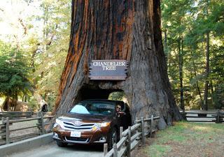 Wayne Dunlap\'s Blog - California Driving Trip of the Redwoods ...