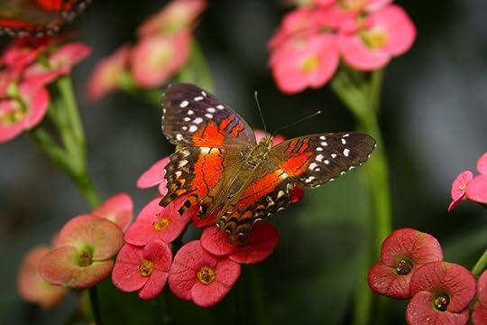 Butterfly photo: nice Butterfly butterleaves_zps61fbdd38.jpg