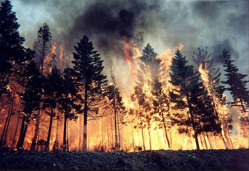 photo wildfire_zps55a0e753.jpg