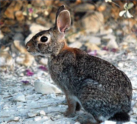 rabbit photo: rabbit rabbit.jpg