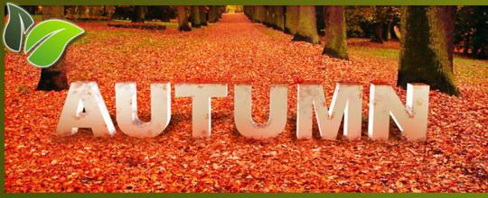 photo autumn9_zps2438d9f0.jpg