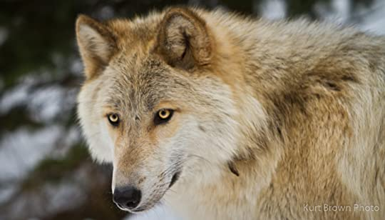 80cf5706 Appearance: ~Fur: ~Eyes: ~Stature: Personality: [At least one paragraph]  History: ~As a Pup: ~As a Cani: ~As a Wolf'en: ~Other: Family: ~Mother: