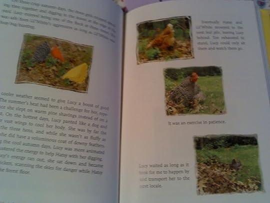 chickens photo 2014-03-28_10-41-20_556.jpg