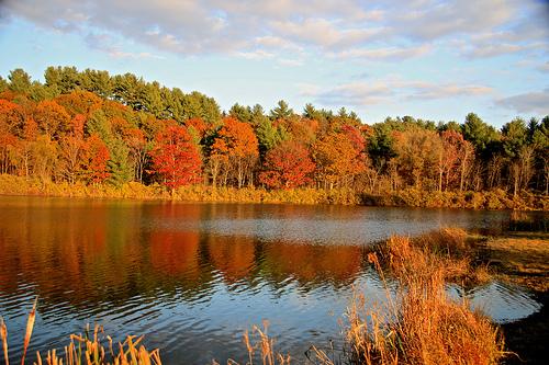 Adirondack Autumn 778