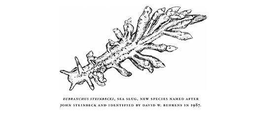 Eubranchus steinbecki