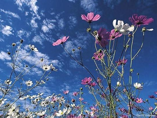 wild flowers photo: Wild Flowers 671028039.jpg