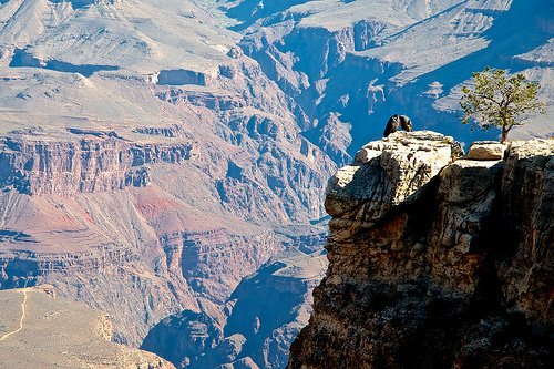 Condors in the Grand Canyon