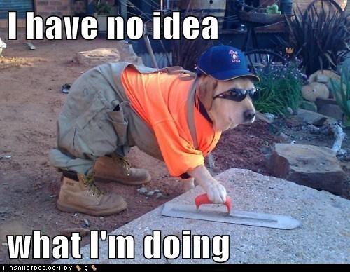 dog dressed for work