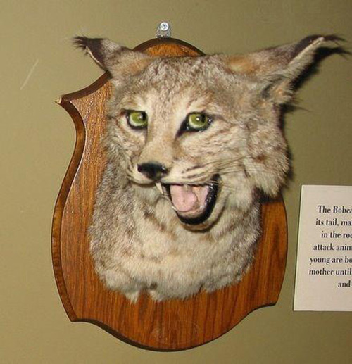 Crap taxidermy kat su what is the chance of landing on red in roulette
