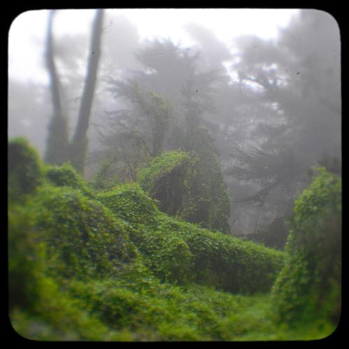 fog covered forest