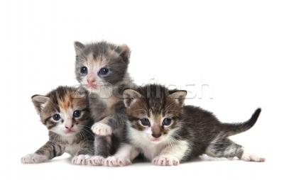 photo 1183921_stock-photo-cute-newborn-baby-kittens-easily-isolated-on-white_zps629e48d7.jpg