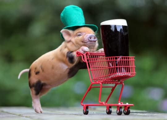 photo Pig-StPaddysDay_zpsfab0949c.png