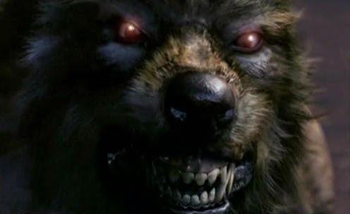 Wolves on Pinterest