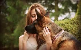 photo dog_zps56dadc51.jpg