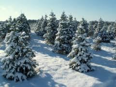 photo trees_zps1e409604.jpg