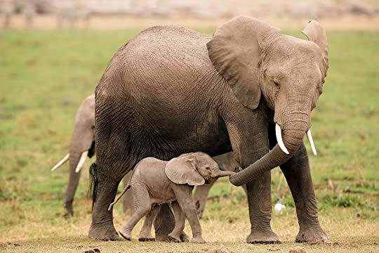 photo LeavingTime_mother-elephant-baby-elephant-calf_zpsb81d42b0.jpg