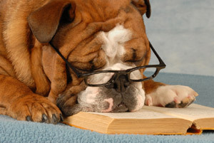 photo dog-reading-a-book_zps58d95844.jpg
