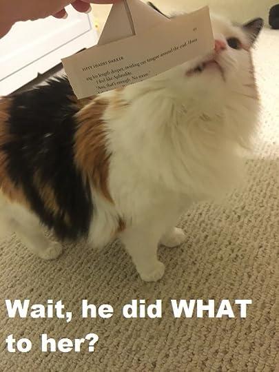 Navessas Bookshelf Glorifiesabusiverelationships Showing - 35 cats pulling ridiculous faces imaginable