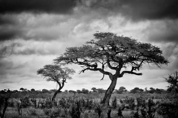 photo tree-2879_fs_zps71uqgrev.jpg