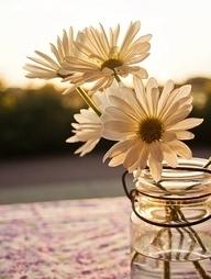 daisies photo: Daisies Daisies.jpg