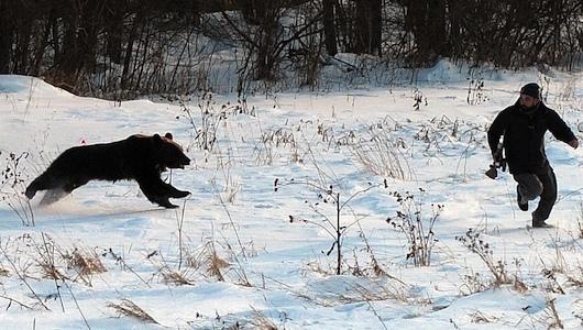 photo bear_attack_01_zps2ejs3uyy.jpg