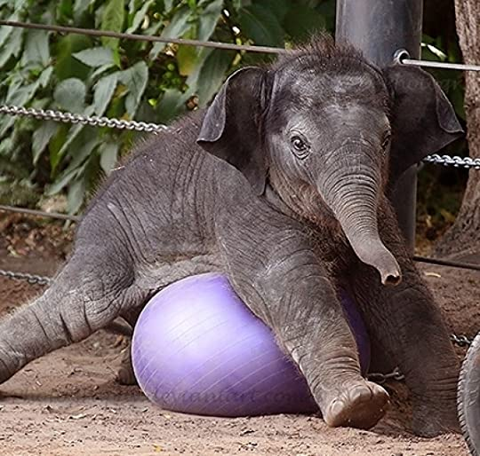 photo l-Baby-Elephant_1.jpg