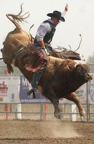 photo bull riding.png