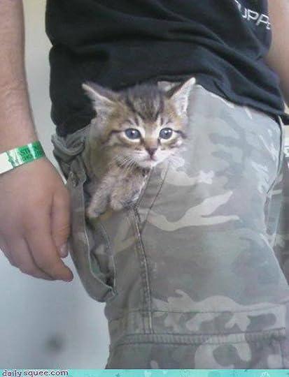 Pocket Kitty!