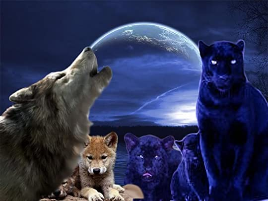 panthers and wolves - Google Search